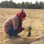 Agricultura no Deserto
